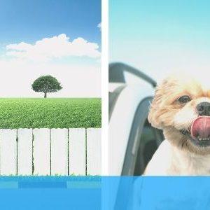 assurance crédit bail auto